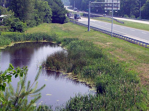 Wet Pond along MD 291 in Talbot County